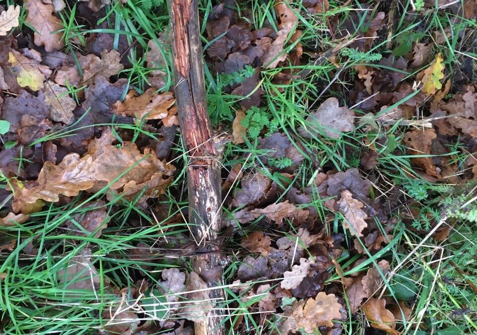 Foto eines abgebrochenen Stocks in Laub und Gras
