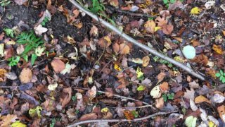 Foto eines dünnen Stocks zwischen braunem Herbstlaub